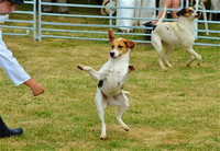 Minehead Harriers Puppy Show 2015