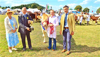 Overall Cattle Champion at Dunster Show 2016