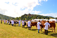 Cattle & Sheep Champions Parade at Dunster Show 2016