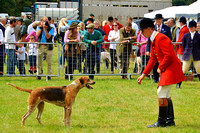 Foxhound Classes at Dunster Country Fair 2017