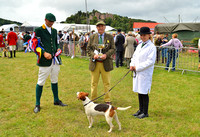 Supreme Champion Hound for Dunster Country Fair 2017