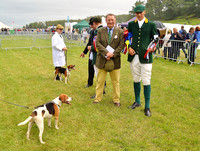 Beagle Classes at Dunster Country Fair.